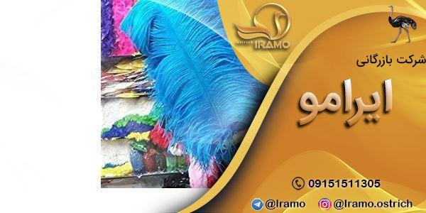 خرید پر شترمرغ در مشهد