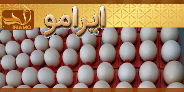 قیمت فروش تخم شترمرغ مولد